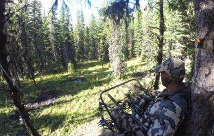 Tree Stand Deer Hunting