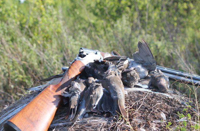 dove with shotgun