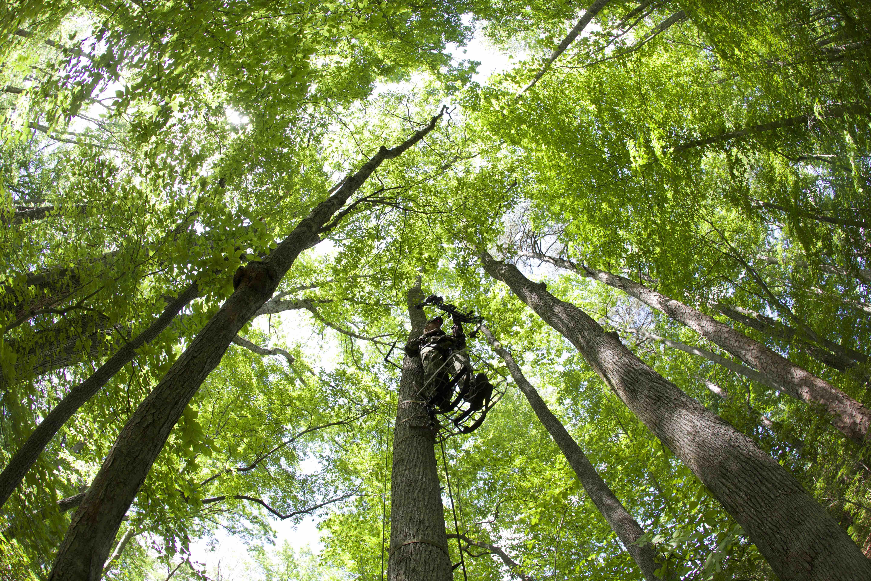 Deer Hunting Tips Tree Stands Vs Ground Blinds Todays Hunter