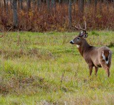 Deer Hunting Guide: The Early Season