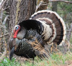 The Essential Turkey Hunting Gear Guide